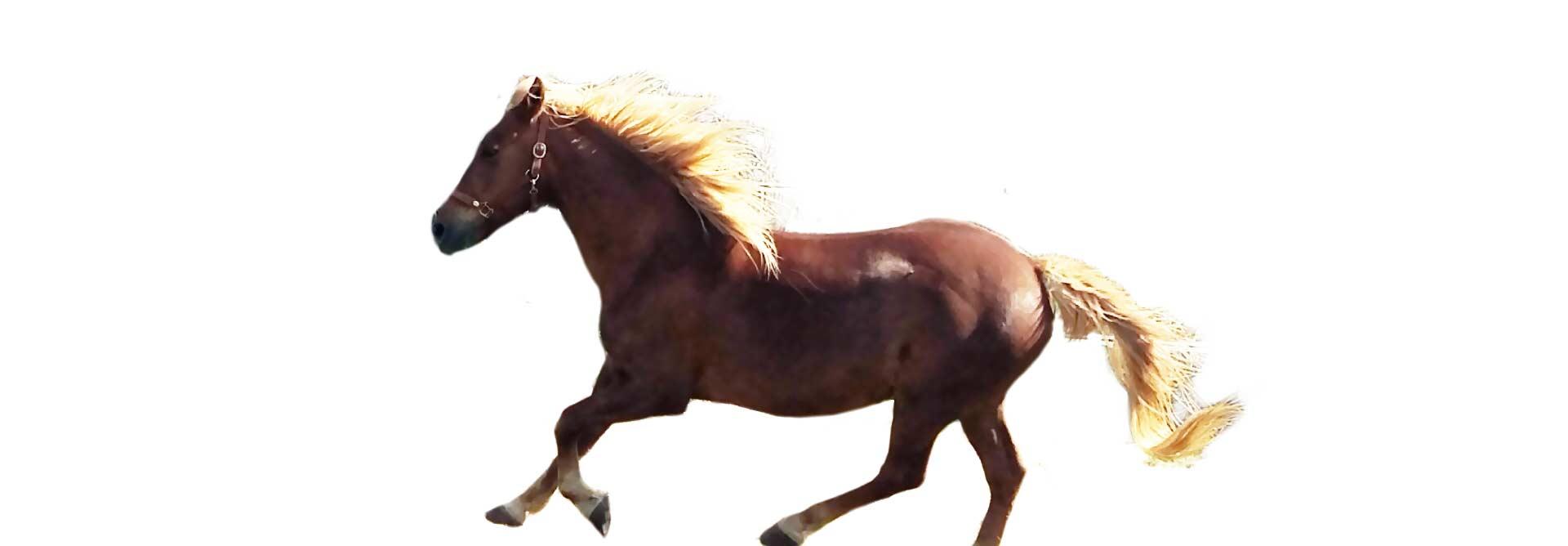 Tout le nécessaire pour prendre soin de votre cheval aux environs de Montpellier